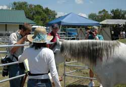 Cherl Ward collaborates with her horses at Equifest 2007